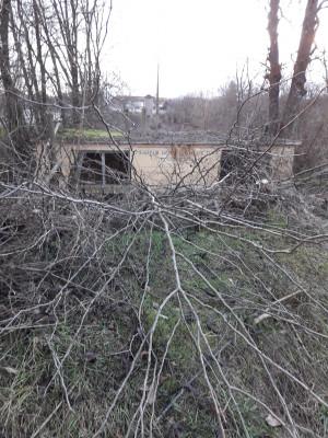 """""""Обезглавени"""" дървета по поречието на река Тунджа"""