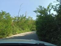 снимка 3 Опасна растителност на пътя