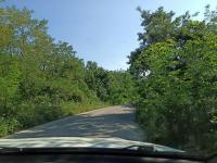 снимка 1 Опасна растителност на пътя