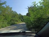 Опасна растителност на пътя