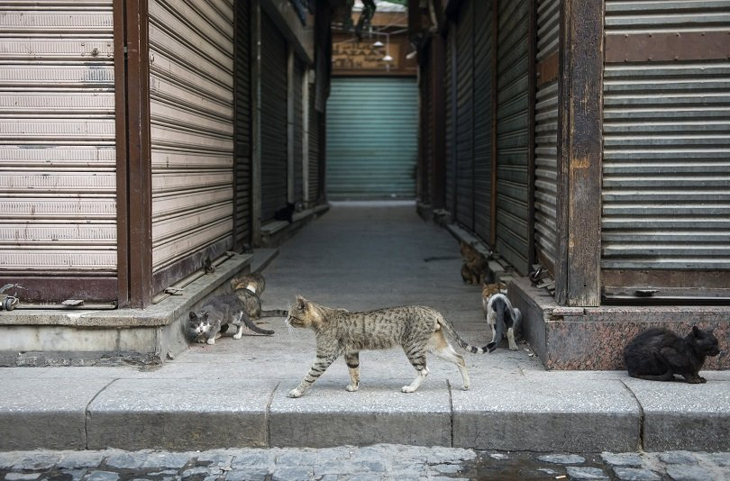 забраняват яденето кучета котки шънджън