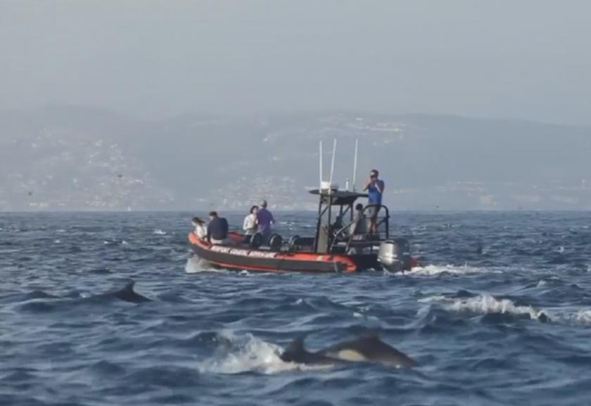 стадо 1000 делфини доближи калифорнийския бряг лагуна бийч