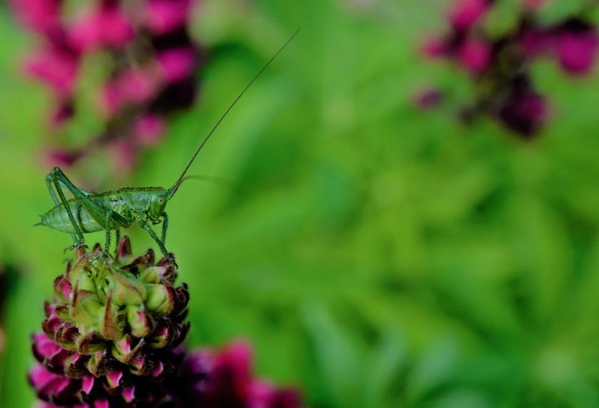 отбелязваме международния ден биоразнообразието