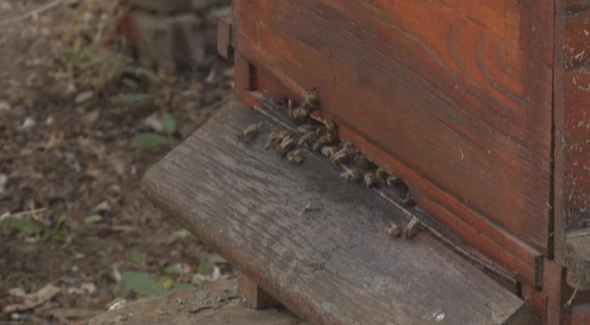 каква причината измрелите пчели плевен добрич