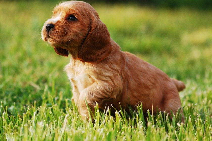 секунди без covid породите кучета подходящи деца