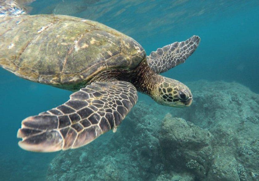 световният ден океаните 30х30 любопитни факти начини отпразнуваме