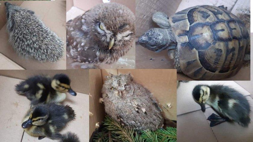 спасиха пет екземпляра защитени видове
