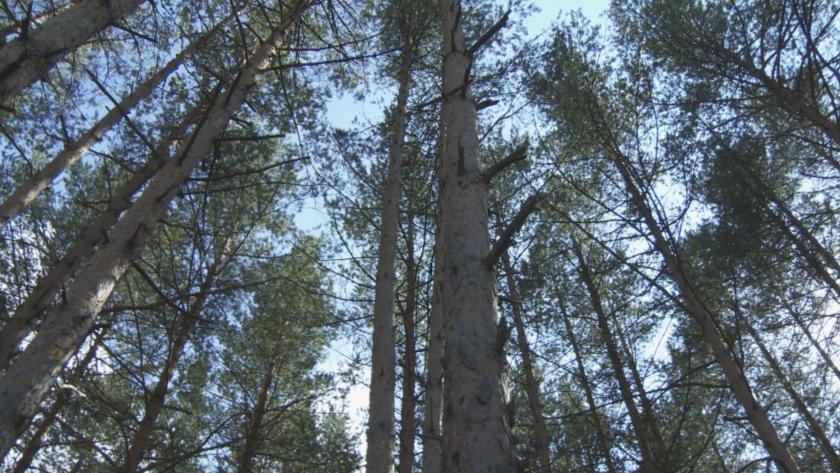 души задържани незаконен добив дървесина