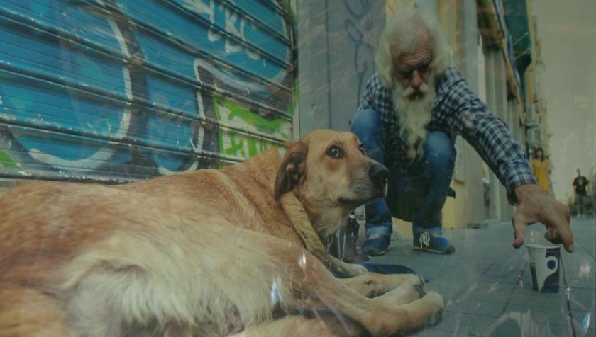 """""""Животът на бездомните животни"""" в 28 кадъра"""
