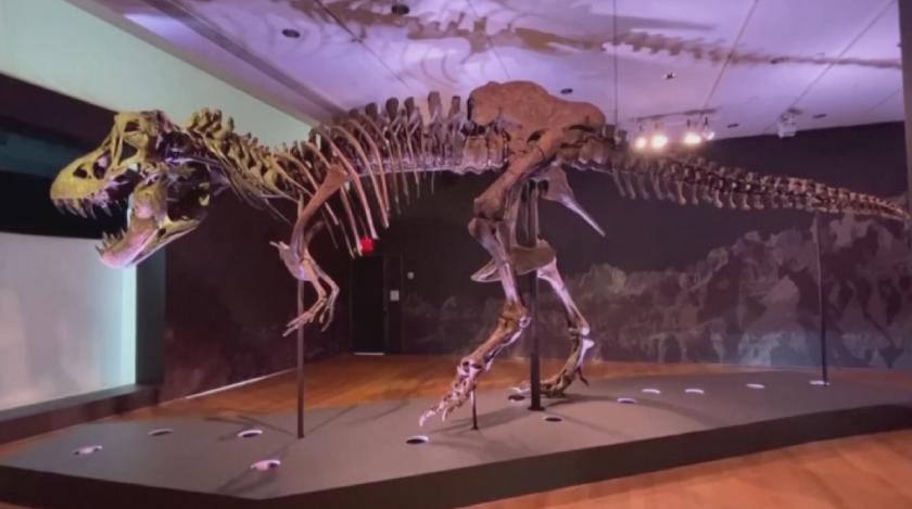 продадоха динозавърски скелет милиона