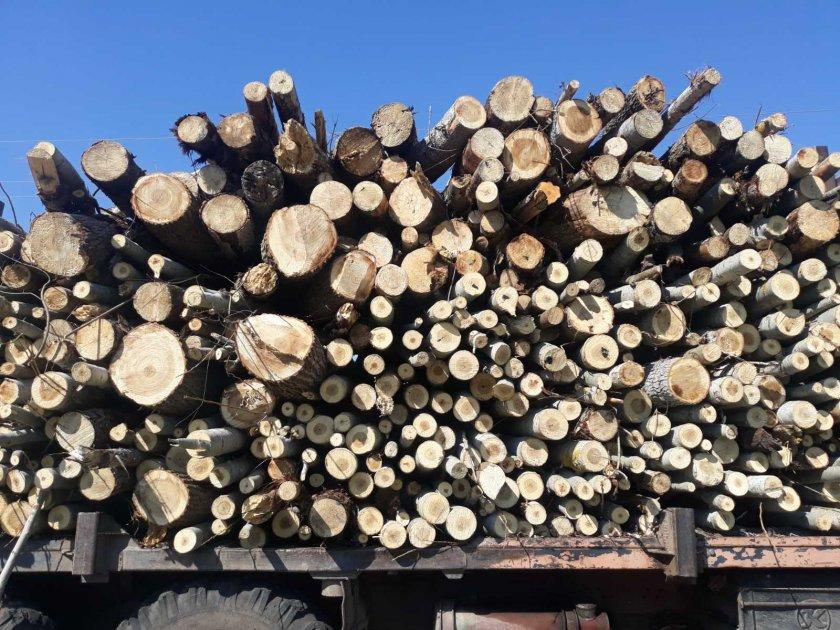 задържаха камион незаконна иглолистна строителна дървесина преследване