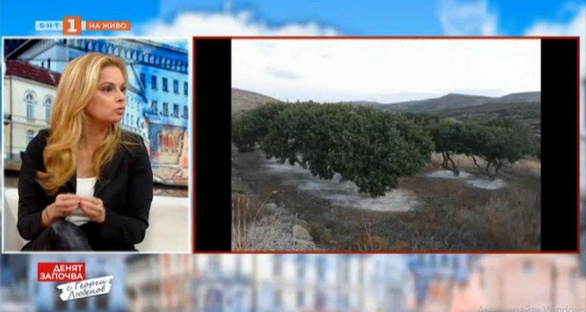 """Аделина Радева разказва историята на мастиковите дървета от Хиос тази вечер в """"Европейци"""""""