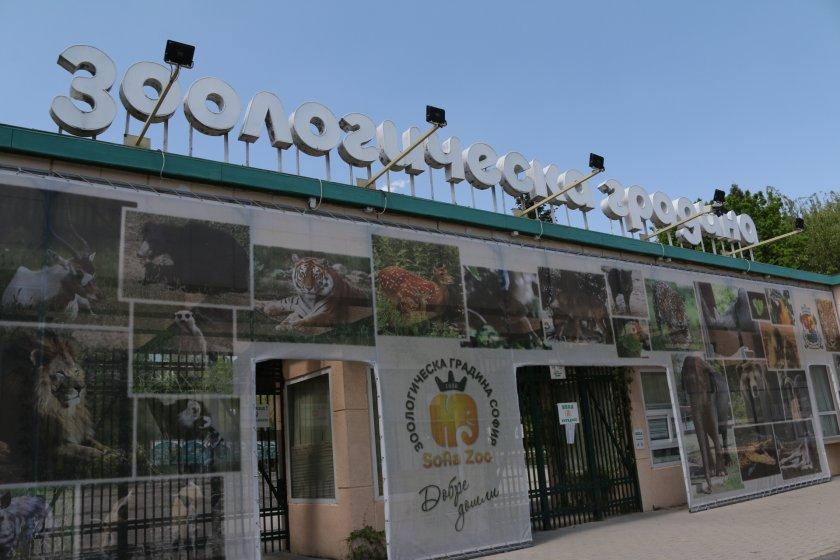 зоопаркът софия остава отворен задължителни маски дистанция посетителите