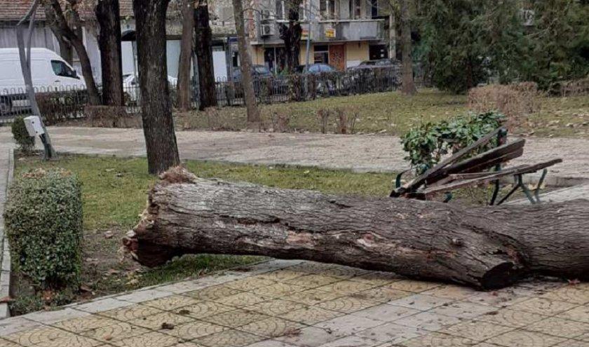 голямо дърво падна пейка пловдивски парк