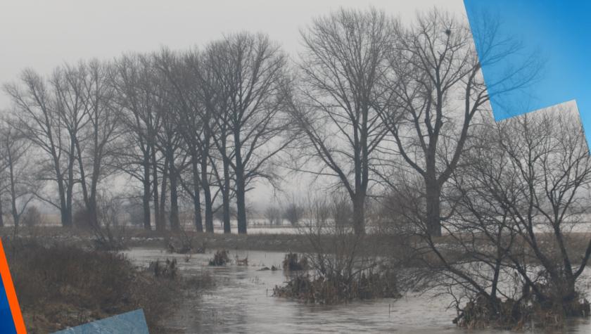 След екокризата в Искър: Мъртви прасета край Марица и затлачени корита на реки в страната