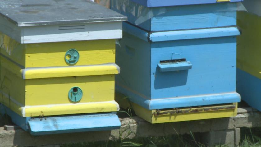 """В Русенско настояват пчеларството да бъде извадено от сектор """"Животновъдство"""""""