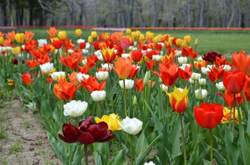 ботаническата градина варна остава собственост софийския университет