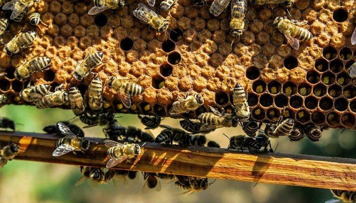 започват проверки състоянието регистрацията пчелните семейства
