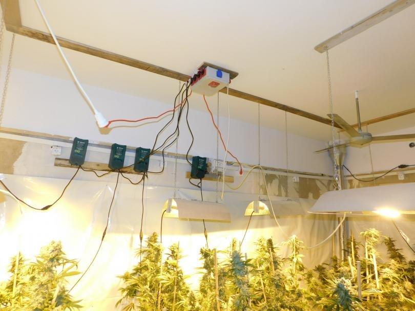 Полицията от Казанлък разкри отново оранжерия за марихуана - този