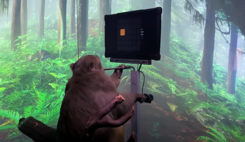 мъск показа нов клип маймуна играе компютърна игра видео