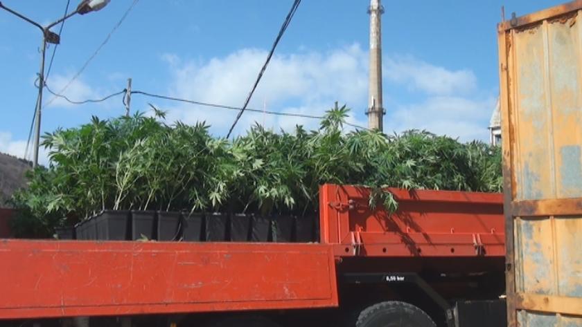 Оранжерия с марихуана беше разкрита в бившия стъкларски завод