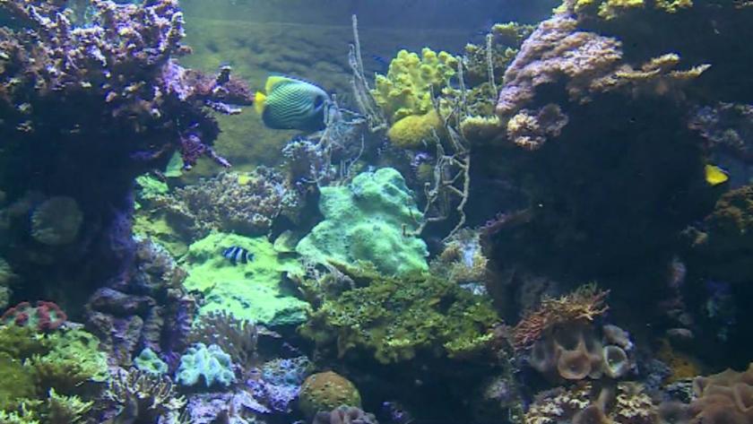 отвори отново големият аквариум европа