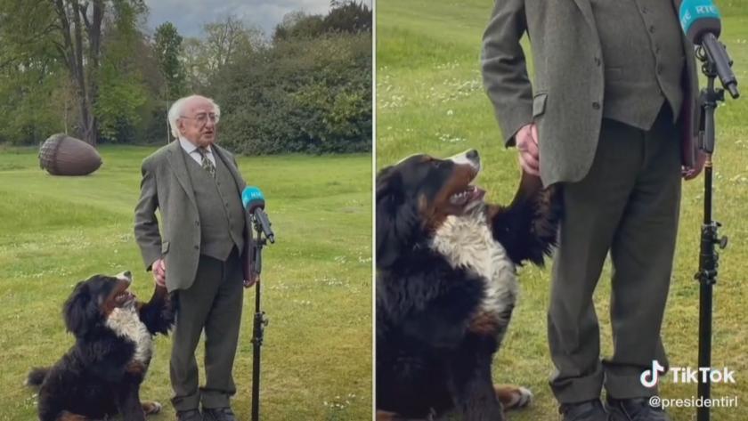 """Кучето на ирландския президент """"открадна шоуто"""" по време на интервю"""