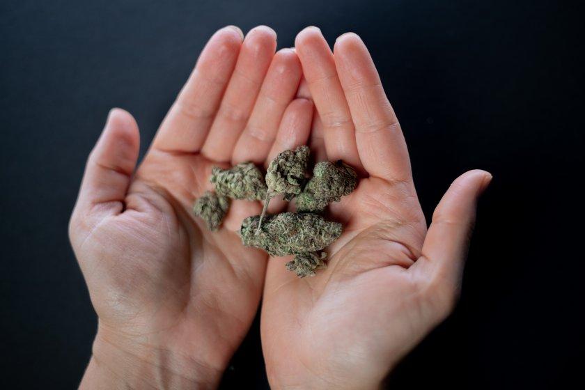 Полицаи хванаха бургазлия с наркооранжерия в хола на жилището му.