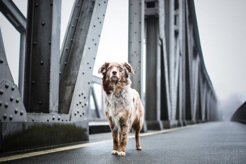Aмериканските власти въвеждат временна забрана за внос на кучета от