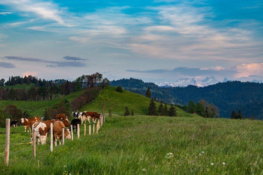 швейцария отхвърля забраната синтетични пестициди
