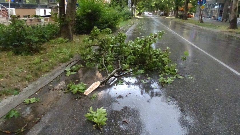съборени дървета изпочупени клони бурята пазарджишко