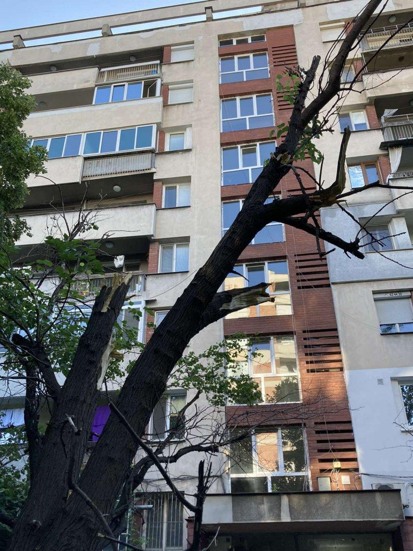 Десетки паднали дървета и сериозни щети по колите след бурята в Пловдив (Снимки)