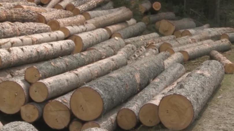 хванаха бракониер рецидивист незаконна дървесина разлог