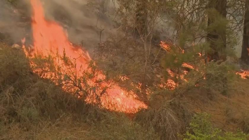 Пожар гори в село Изворово.Засегнати са около 1000 дка широколистна