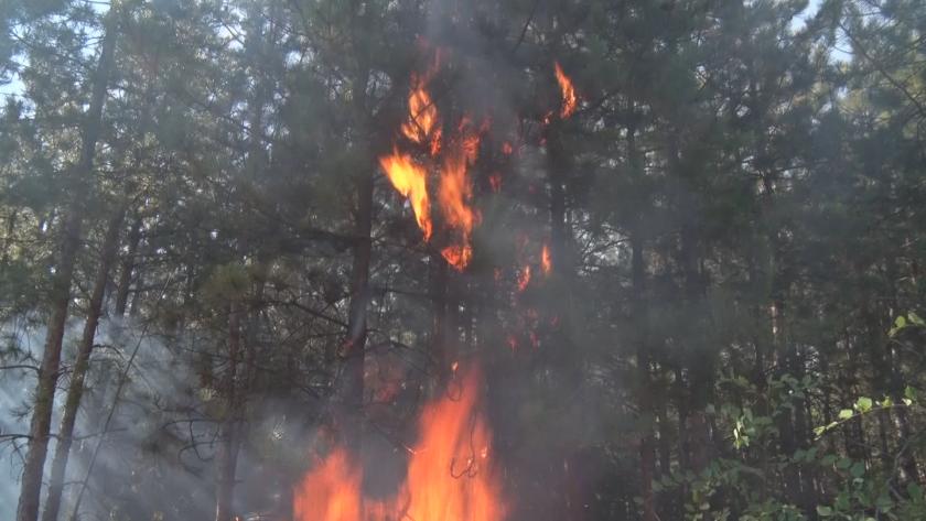 Повече от 100 огнеборци и горски служители се борят с пожара край Свиленград