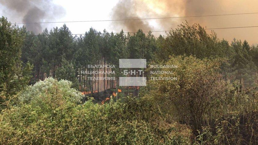 Пожарът в боровата гора в парк Урса над Перник се