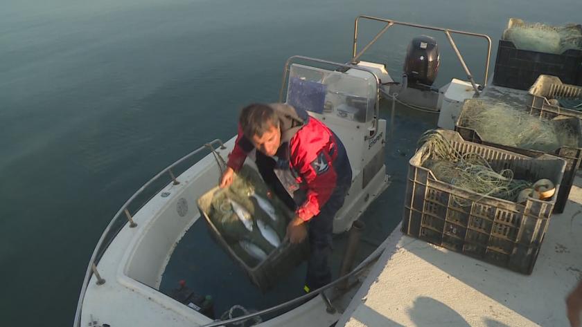 Рибарите във Варна се радват на добър улов през последните