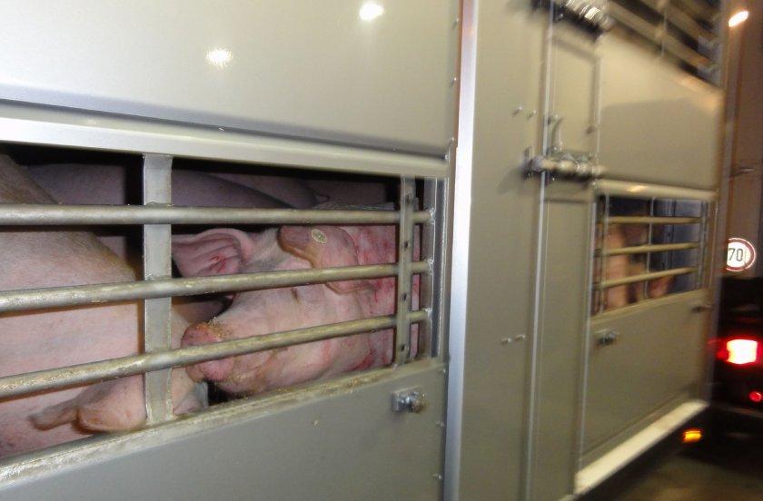 евродепутати идват нас проверят отношението животните