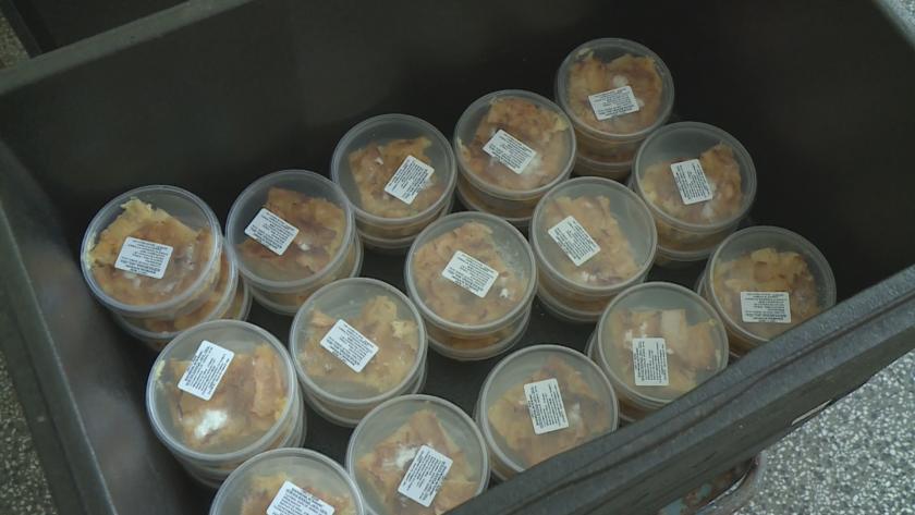 Агенцията по безопасност на храните извърши засилени проверки на столовете