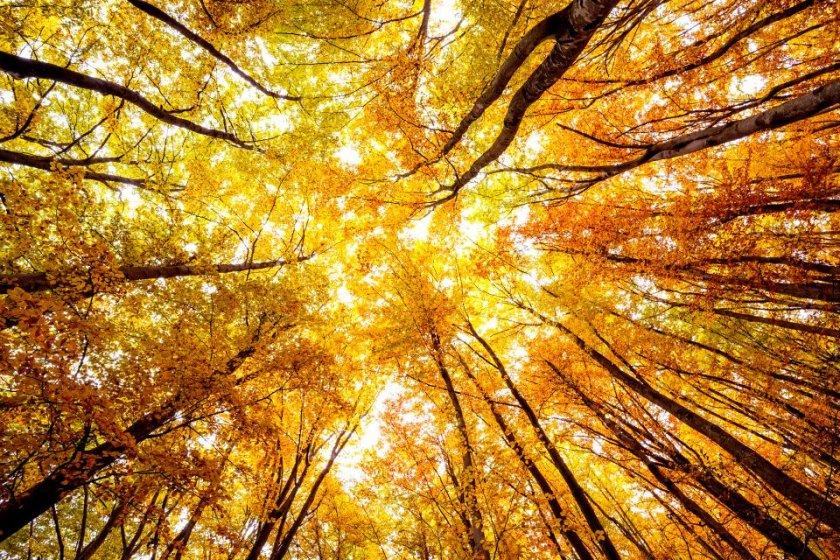Магията на есента (ГАЛЕРИЯ)