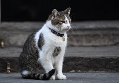 Котките са подходящи за тестване на ваксини за COVID-19
