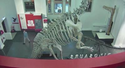 Младеж си устрои индивидуална нощ в Австралийския музей. Обвиниха го за нахлуване и кражба