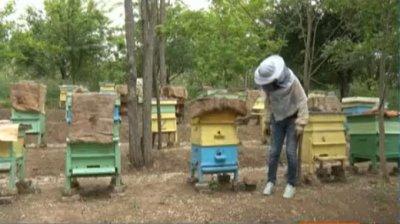 Защо измират пчелите в Плевенско?