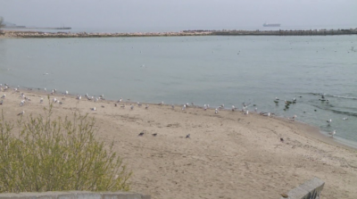 Варненци протестираха пред общината заради замърсяването на езерото