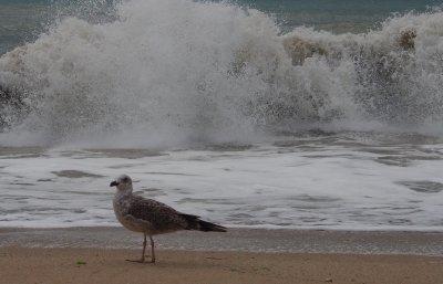 Лято, море, но и страхове. Имаме резервация, но се отказваме. Какво следва?