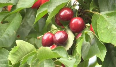 Три вида договори за наемане на работна ръка в земеделието