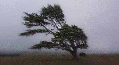 Жълт код за опасен вятър в 13 области. ГДПБЗН припомня правилата за безопасност