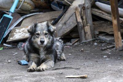 Проверка в русенски имот след сигнал: В лоши условия се отглеждат 14 кучета