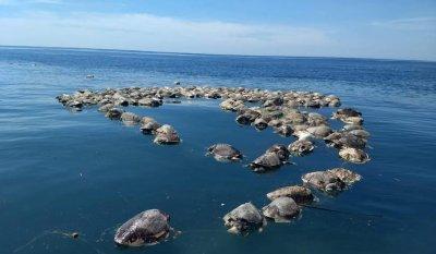 COVID в полза на костенурките - редки видове се излюпиха в Африка заради липса на туристи