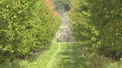Слаба реколта от кайсии и череши в Русенско и Тутраканско